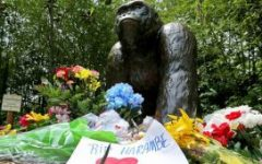 Killing of Harambe: Just or Unjust?