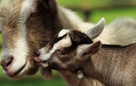 National Zoo Closes Due to E. Coli Scare