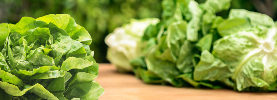 The Spread of E. Coli On Our Leafy Greens