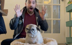Navigation to Story: Who is Noodle The Pug?